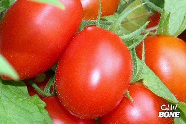 Cà chua rất tốt cho người bị khô khớp
