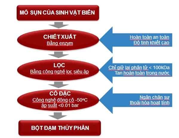 Cơ chế hoạt động của Bột đạm thủy phân trong sản phẩm GHV Bone