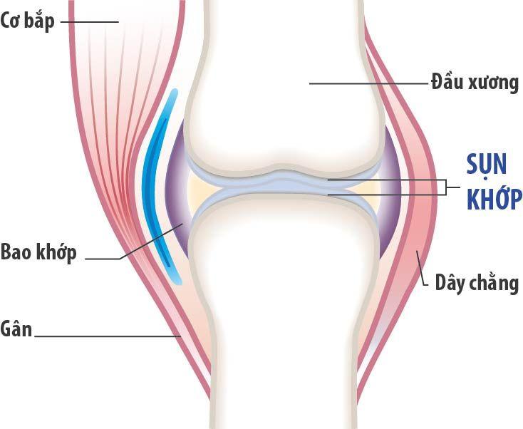 Khớp và sụn khớp đóng vai trò quan trọng trong việc vận động và di chuyển của cơ thể