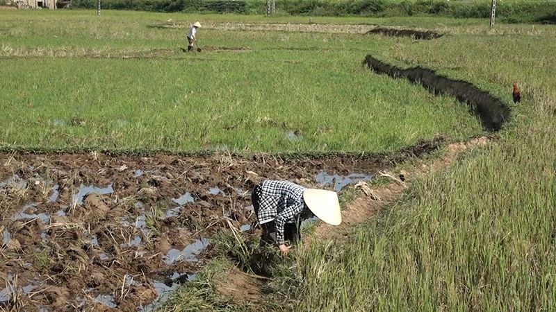 Người nông dân có nguy cơ mắc bệnh cao