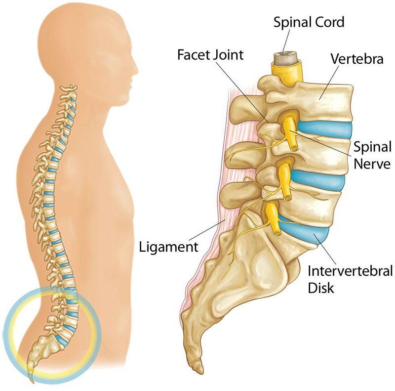 Hình ảnh miêu tả cột sống thắt lưng