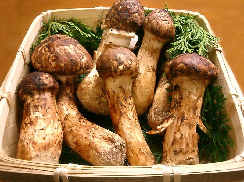 """Các loại nấm được ví như """"thần dược"""" cho hệ xương khớp"""